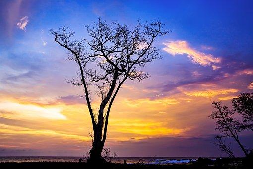 Landscape, Coast, Sunset, Arboretum, Silhouette