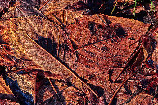 Leaves, Autumn, Morning Sun, Leaf Coloring, Autumn Leaf