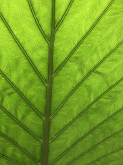 Tropics, Leaf, Background, Green, Rainforest, Jungle