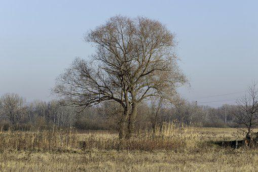 Willow, Wood, Deciduous, Lonely, Autumn, Nature, Mood