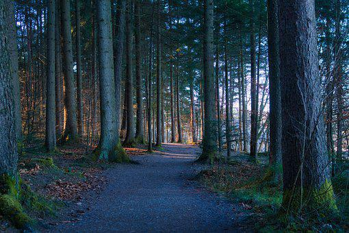 Away, Forest, Path, Nature, Autumn, Forest Path, Trail