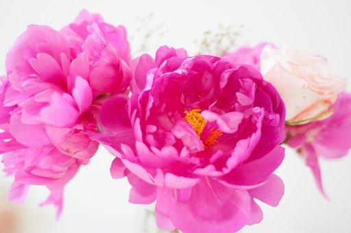 Cute, Pink, Flower, Spring, Unicorn, Pattern