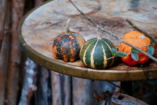Pumpkins, Table, Plants, Kitchen, Living Room, Flower