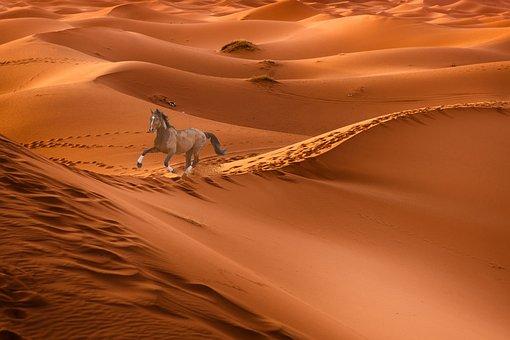 Horse, Race, Desert, Sand, Sport, Freedom, To Listen