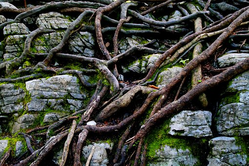 Braid, Root, Root Network, Structure, Texture