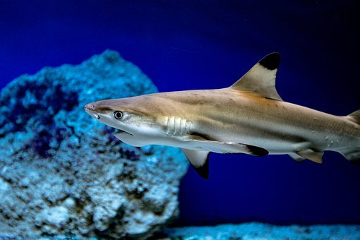 Shark, Fish, Aquarium, Water, Sea, Underwater World