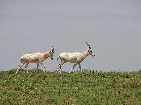 White Read Sandstone, Read Sandstone, Africa, Wildlife