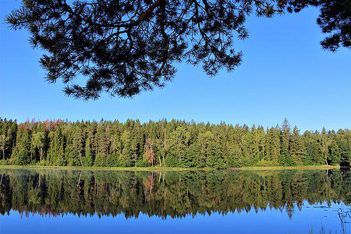 Lake, Nature, Water, Landscapes, Forest, Wilderness