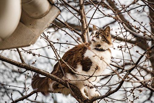 Cat, Tree, Adventure, Animal, Nature, Green, Kitten
