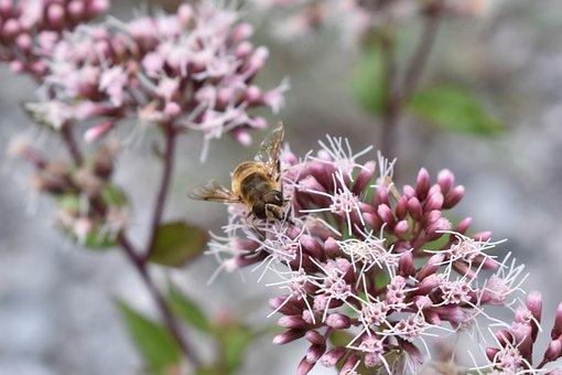 Bee, Honey, Insect, Nature, Beehive, Honeycomb, Pollen