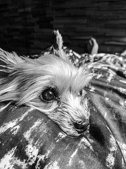Dog, Black, Blackandwhite, Black White, White, Animal
