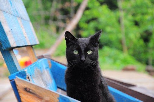 Cat, Cat Pictures, Black, Black Cat, Cat Photos