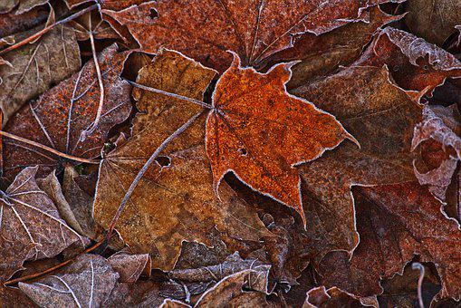 Leaves, Hoarfrost, Ripe, Morning Sun, Cold, Frozen