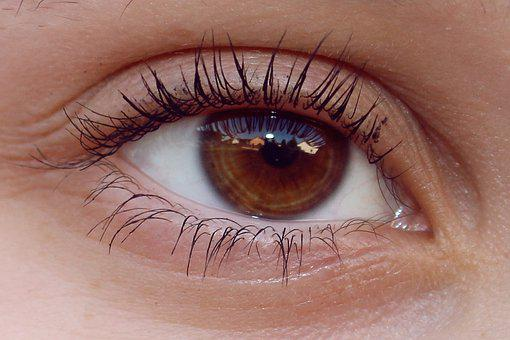 Eye, Brown, View, Close Up, See, Eyelashes, Person