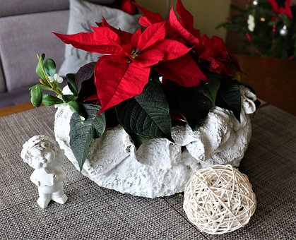Holiday, Decoration, Flower, The Star Of Bethlehem