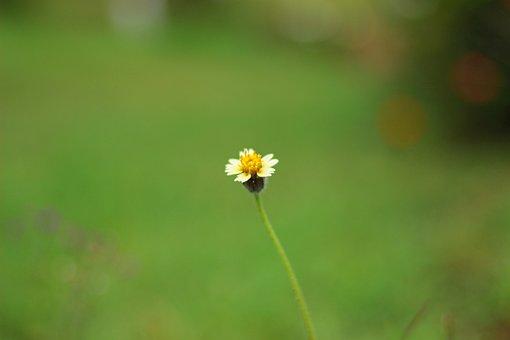 Blossom, Nature, Pacific, Flower, Fiji, Natural, Garden