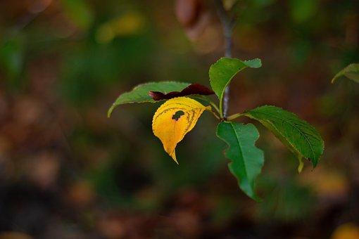 Leaf, Foliage Leaf, Especially, Hole, Yellow, Colorful
