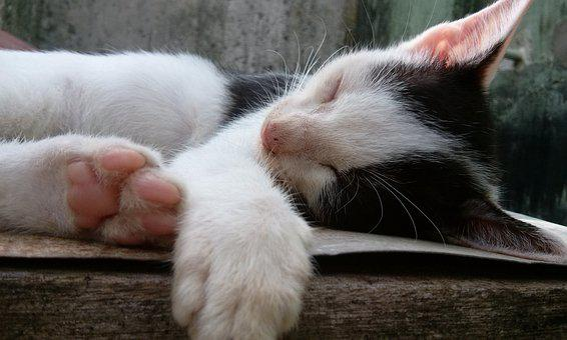 Cute, Cat, Kitten, Pet, Fur, Domestic, Kitty, Young