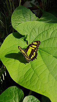 Potsdam, Biosphere, Butterfly, Animal, Nature