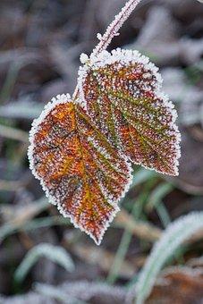 Frost, Morning, Winter, Leaf, Cold, Nature, Landscape