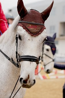 Portrait, Horse, Bridle, Riding, Sport, Holiday