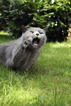 Cat, Grass, Animal, Pet, Garden, Rush