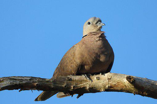 Sank, Cuckoo Land, Animal, They Dove, Bean Bird, Twigs