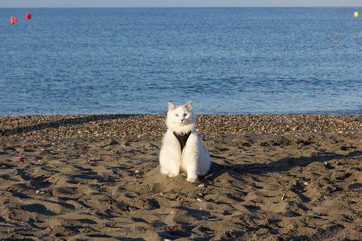 Cat, Beach, Pet, Sea, Nature, Animals, Holiday