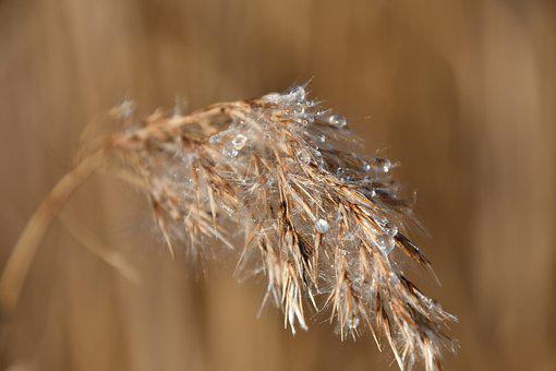 Rime, Just Add Water, Reed, Wet, Melted, Frost, Speck