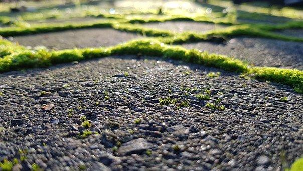 Moss, Stones, Paving Stones, Bemoost