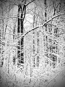 Canada, Snow, Winter, Landscape, Cold, Trees, Hiking