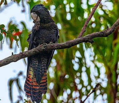 Bird, Parrots, Wildlife, Exotic, Plumage, Wild