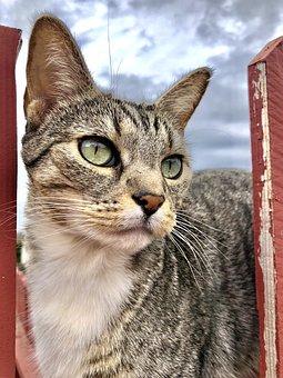 Kitty, Cat, Kitten, Pet, Feline, Animal, Cute, Adorable