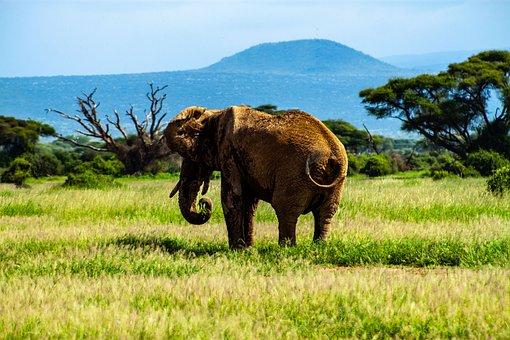 Amboseli, Amboseli National Park, Safari, Kenya, Africa