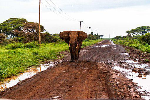 Amboseli National Park, Elephants, Kenya, Africa