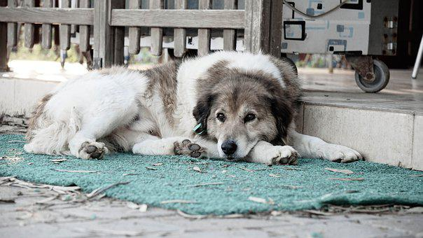 Dog, Sad, Animal, Alone, Waiting, Looking, Forget