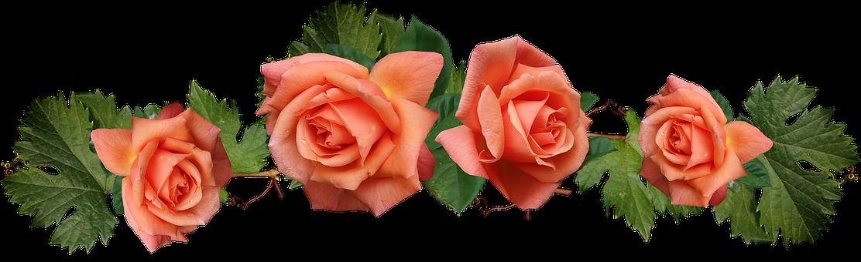 Flowers, Roses, Grape Leaves, Arrangement, Cut Out