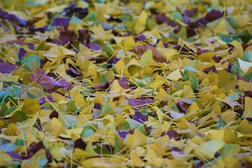 Autumn, Autumn Colours, Fall Foliage, Autumn Evening