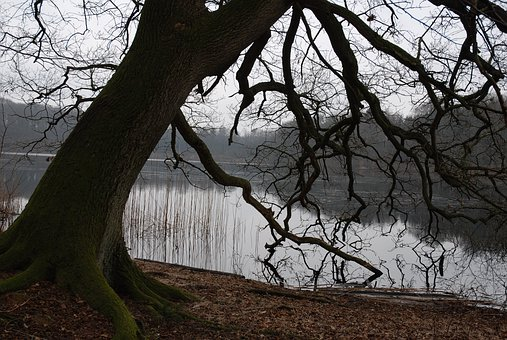 Lake, Autumn, Branches, Wood, Dis, Mood, Overcast Skies