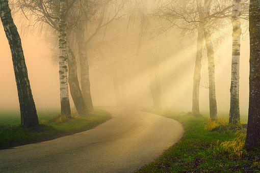 Away, Avenue, Sunbeam, Fog, Haze, Warm, Rays, Light