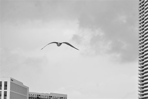 Gull, Flight, Skyscrapers, Baltic Sea, Travemünde