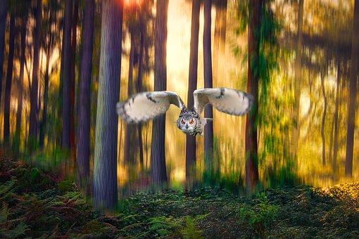 Owl, Forest, Bird, Nature, Animal, Feather, Wilderness