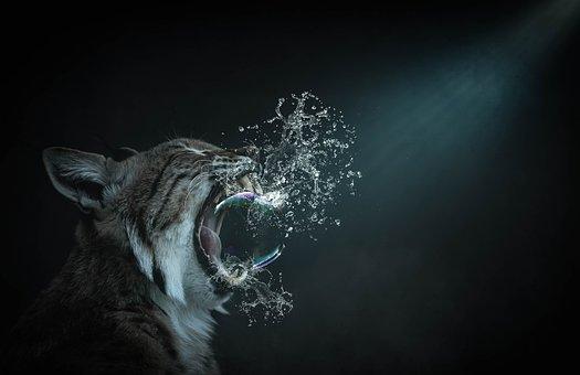 Fantasy, Cat, Soap Bubble, Burst, Composing, Scene