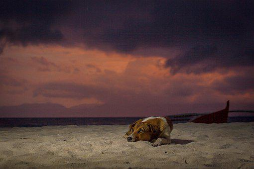 Dog, Stray, Sunset, Sunrise, Seascape, Clouds