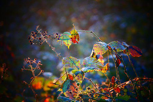 Sheet, Leaves, Color, Colorful, Autumn, Nature, Green
