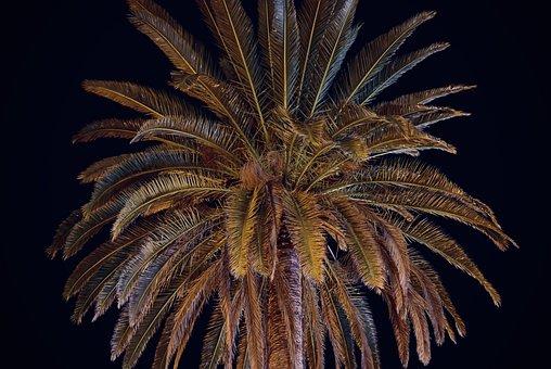 Palm, Night, Vacations, Evening, Travel, Dark, Tropical