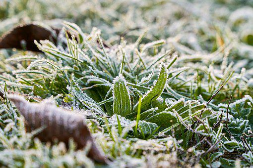 Leaves, Frozen, Cold, Frost, Winter, Crystals, Ice, Dew
