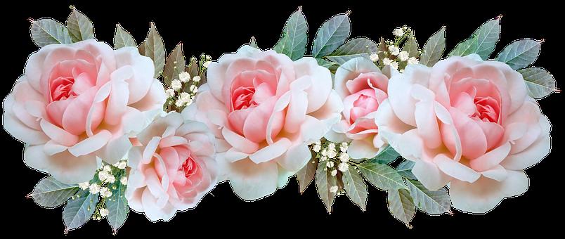 Flowers, Pink, Roses, Leaves, Arrangements, Cut Out