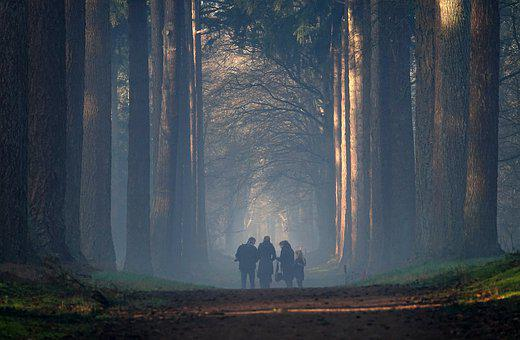 Fog, Light, Shadow, Tree-lined Street, Romantic, Nature