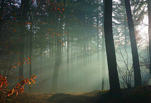 Fog, Light, Shadow, Romantic, Nature, Trees, Forest
